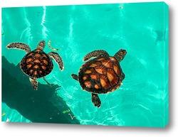 Постер Turtle045
