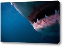 Постер Shark029
