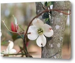 Flower480