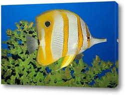 fish151