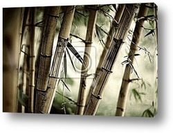 Постер Bamboo forest background