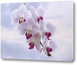 Постер Ветка розовой орхидеи на фоне неба