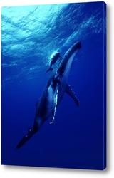 Постер Whale007