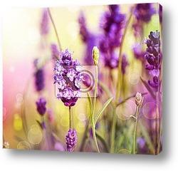 Постер Lavender Field