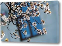 Постер В моём городе сакура цветёт