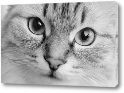 Красивый котенок,смотрящий на тебя