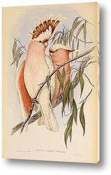Постер Птицы Австралии
