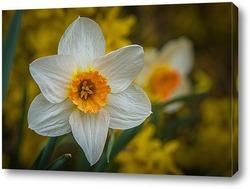 Постер Весна пришла