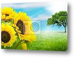 sunflowers on a yellow background in summer