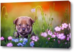щенок на лугу