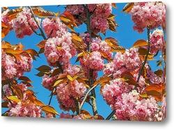 Постер Цветение сакуры в апреле
