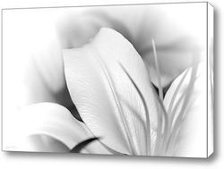 Постер Белая лилия.