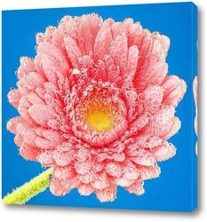 Постер Розовая гербера