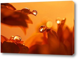 Постер Капли на лепестках цветов