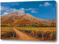 Постер Там,где зреет виноград
