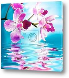 Постер Красивые цветы орхидеи, отражающиеся  в воде