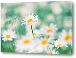 Постер Ромашки в пастельных тонах в поле