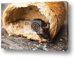 Постер Bread and mouse