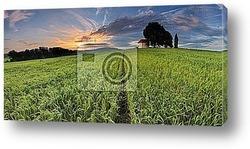 Постер Весенний Пейзаж с полем пшеницы. Восход солнца