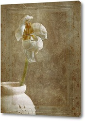 Постер Старая открытка (гербарий)