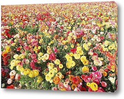 Flower735