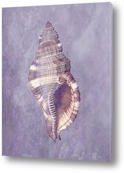 shell036