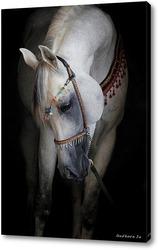 Глаз белой лошади
