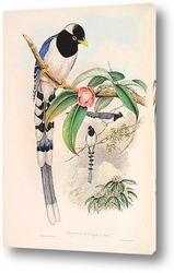 Птицы Азии