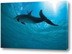 dolphin071