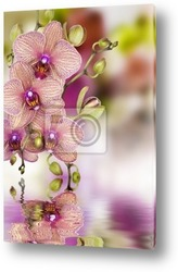 """""""Цветок орхидеи"""""""