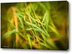 Постер Дождевые капли на зелёной траве