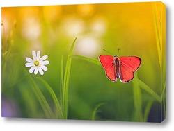Постер яркая оранжевая бабочка сидит на летнем лугу