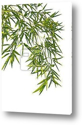 Постер Bamboo leaves