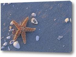 Морская звезда на песке на пляже