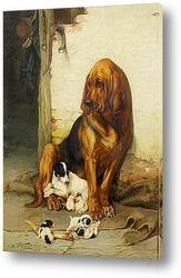 Собаки и птичка