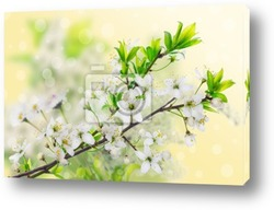 Цветущее дерево
