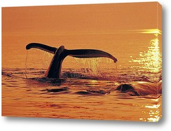 whale025