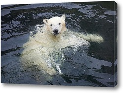 Постер Белый медвежонок