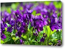 Постер Фиолетовая весна