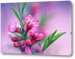 Весенние цветение.