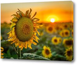 Картина Дитя солнца