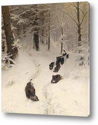 Стадо оленей на лесной поляне
