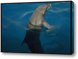 dolphin048