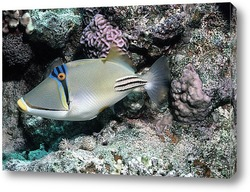 fish110
