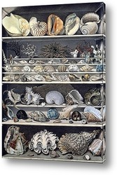 Постер Коллекция раковин