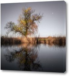Картина Плакучая ива