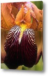 Flower543