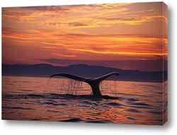 whale007