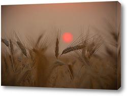 Постер Пшеничный закат