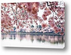magnolia-tree flower buds